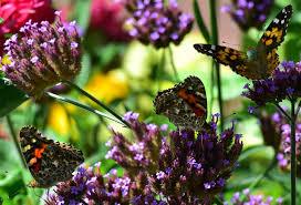 national weather service posts radar images migrating butterflies