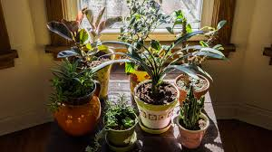 my indoor plant laboratory 4 seasons painting and landscape design