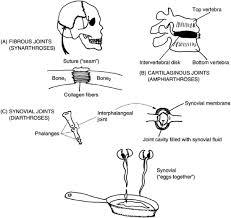 bone archives page 5 of 9 human anatomy chart