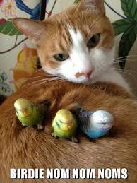 Nom Nom Nom Meme - birdie nom nom noms lolcats lol cat memes funny cats
