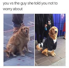 Meme Cheezburger - 30 doggo memes that will leave you feeling warm and fuzzy