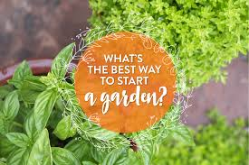 what u0027s the best way to start a garden kitchn