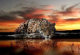 cat jaguar wall murals for wall homewallmurals co uk wild cat jaguar wall murals for wall homewallmurals co uk