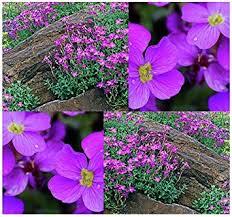 cheap perennial garden flowers find perennial garden flowers