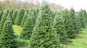 7 fun places to cut your own christmas tree in northeast wisconsin