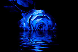 blue roses blue photograph by doug