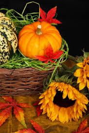 fall halloween images free images leaf fall flower floral decoration orange food
