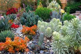 Low Maintenance Garden Ideas Plant Combination Ideas Plant Family Aeonium