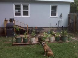 wild man farm blog archive dog door with a ramp