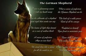belgian malinois quotes such a wonderful poem of the ever so amazing german shepherd dog