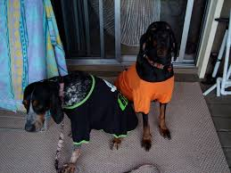 Halloween T Shirts For Dogs by October 2010 U2013 The Royal Coonhounds