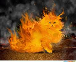 cute halloween kitten wallpaper i u0027m i on fire cutest cuteimages net