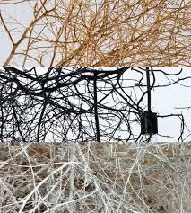 Tumbleweed by Petite Native Tumbleweed Chandelier Home Do Not Use Lighting