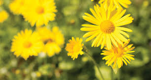 Image Of Spring Flowers by 33 Types Of Yellow Flowers Proflowers Blog