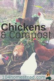 Backyard Chickens Magazine by Chickens U0026 Compost Moving The Compost To The Run