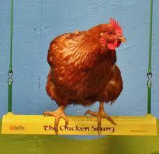 Designerk Hen Bhwt Chicken Swing