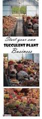 best 25 plant nursery ideas on pinterest garden shop nursery