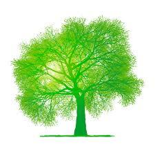 creative green tree design vector graphics 02 illustrations