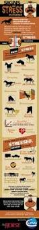 538 best horses and oils and oils for our other pet companions