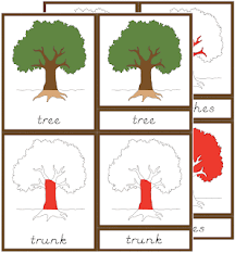 montessori tree printable early childhood botany nomenclature cards the helpful garden
