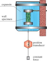 diagram of plant cell diagram gallery wiring diagram