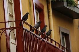 taubenabwehr balkon wie schütze ich mich am besten gegen tauben markt de