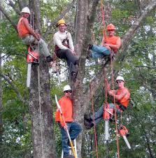 templeman tree service