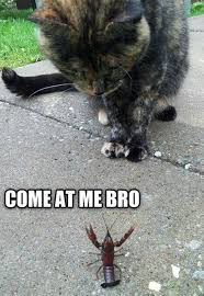 Come At Me Meme - lolcats come at me bro lol at funny cat memes funny cat