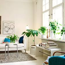 room with plants buy top 10 plants for living room online at nursery live largest