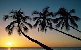 Palm Tree Wallpaper 13 Beautiful Free Beach Wallpapers