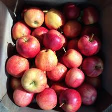 Local Pumpkin Farms In Nj by 20 Apple Picking Farms Pumpkin Patches And Cider Mills In The