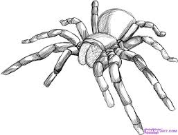 drawn arachnid simple pencil and in color drawn arachnid simple