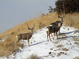 North Dakota wildlife tours images 31 best take a tour of williston north dakota where fracking jpg