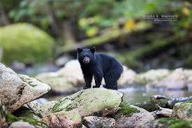 10 photos baby bears adorable cute cool