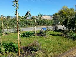 Backyard Organics Sacred Earth Design Food Forest Design And Installation Ashland Or