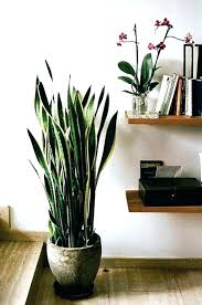 decorative indoor plants modern indoor plants modern houseplants as fresh decoration covers