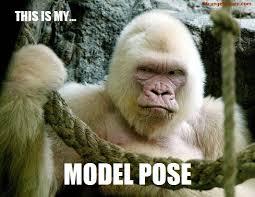 Sexy Monkey Meme - fun friday animal meems dusty crabtree