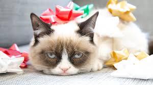 Grumpy Cat Birthday Memes - grumpy cat birthday meme wallpaper 1368479
