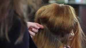 female haircutting videos clipper york terrier getting haircut macro female hands dog hair