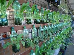 Bottle Garden Ideas 63 Best Garden Ideas Images On Pinterest Gardening Potager