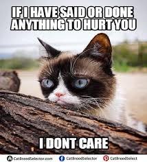 Funny Grumpy Cat Meme - grumpy cat memes cat breed selector