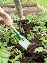 Types Of Garden Rakes - types of garden tools and equipment hgtv