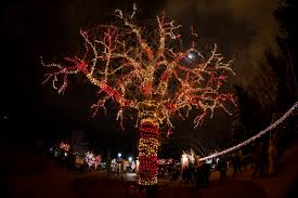 Zoo Light Chicago by Lincoln Park Zoo Announces New Events As Part Of 22nd Annual