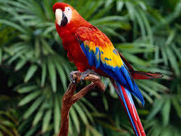 Exotic Colors by Macaws Pictures Places To Visit Pinterest Bird Animal And