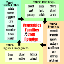 Three Sisters Garden Layout by Vegetable Families And Crop Rotation Preparednessmama