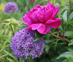 Types Of Flower Gardens Types Of Alliums
