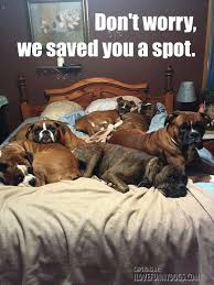 Dog In Bed Meme - 363 best dog memes images on pinterest dog memes funny dogs and