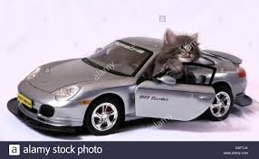 grey porsche 911 cute grey kitten posed in miniature grey porsche 911 turbo car