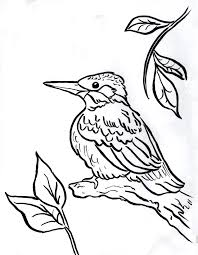 kingfisher coloring page samantha bell