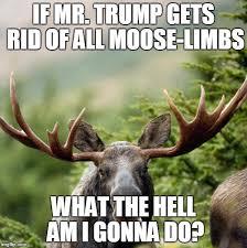 Moose Meme - moose meme generator imgflip